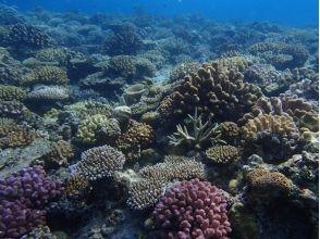 【沖縄・本部町】秘境の地サンゴ畑へ!!Cコースの魅力の説明画像