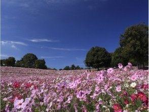 【東京・国営昭和記念公園】自然の中でセグウェイを楽しもう!ティータイム付き♪の魅力の説明画像