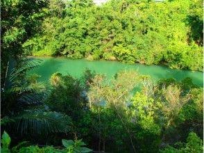 プランの魅力 比謝川でのマングローブカヤック の画像