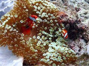 プランの魅力 かわいい魚と泳ぐ の画像
