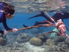 プランの魅力 魚を追う の画像