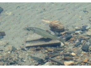 プランの魅力 青木湖の魚 の画像