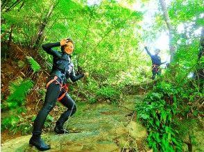 プランの魅力 Jungle explorer の画像