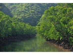 プランの魅力 マングローブ林をゆっくり進みます。 の画像
