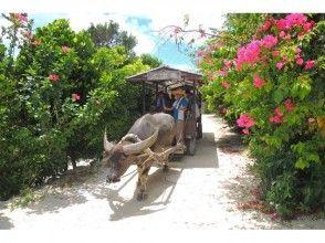 プランの魅力 水牛車での~んびり観光 の画像