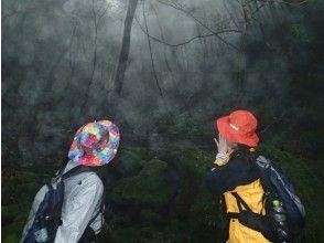 プランの魅力 雨の日は森が神秘的に の画像