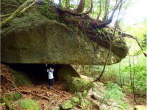 プランの魅力 屋久島の壮大な自然が最高の思い出に! の画像