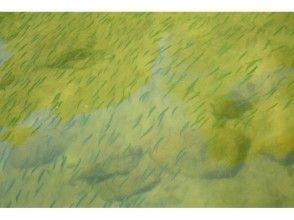 プランの魅力 三透明度非常高,所以当你划船的时候经常遇到一群鱼! の画像