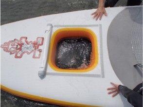 【和歌山・浜の宮】SUP(スタンドアップパドルボード)体験コースの魅力の説明画像