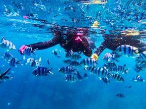 プランの魅力 喜欢喂鱼♪ の画像