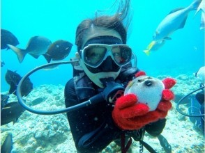 プランの魅力 海の生き物ともハイチーズ♪ の画像