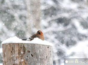 [Hokkaido Abashiri] snowshoe DE snow of forest walk (90 minutes) charm of description image