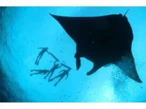 【沖縄・石垣島】マンタシュノーケル&サンゴ礁体験ダイブ!お手軽半日コース!の魅力の説明画像