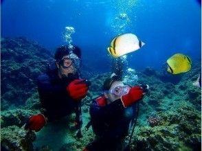 プランの魅力 熱帯魚餌付けも無料で体験できます。 の画像