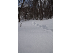 Charm of description image of Hokkaido, Sapporo] snowshoe leisurely 1-day course Hakkenzan walking (guide accompany)