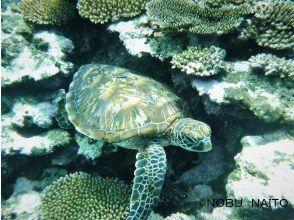 プランの魅力 Sea turtles will welcome you offshore to snorkeling! の画像