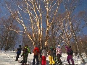 【山梨・八ヶ岳】雪原が月で輝く幻想的な世界!ムーンライトスノーシューツアーの魅力の説明画像