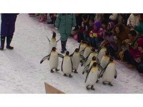 プランの魅力 旭山动物园 の画像
