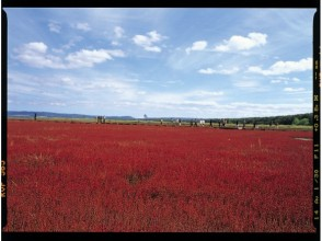 プランの魅力 它是诺托罗湖最大的珊瑚草殖民地而闻名。 の画像