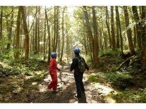 プランの魅力 在原始森林中漫步时感觉焕然一新! の画像