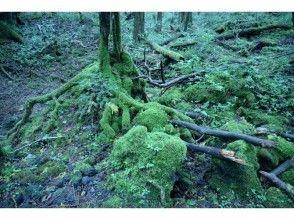 プランの魅力 我为苔藓狂热而死!很多茂密的苔藓! の画像