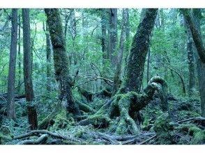 プランの魅力 一棵奇怪的树,似乎开始走了。你为什么站立? の画像