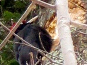 【北海道・札幌】エゾフクロウの棲む冬の森スノーシュートレッキングの魅力の説明画像