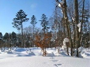 [北海道,札幌] Ezofukurou住冬季森林徒步雪兔吸引力的描述形象