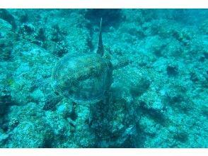 プランの魅力 也适合神秘的海洋生物♪ の画像