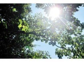 プランの魅力 木の隙間からまぶしい太陽! の画像