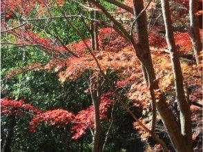プランの魅力 The forest is full of the colors of the four seasons. See, touch, feel and enjoy the power of nature. の画像