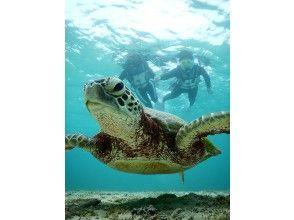 プランの魅力 我会在可以站起来的地方寻找海龟! の画像
