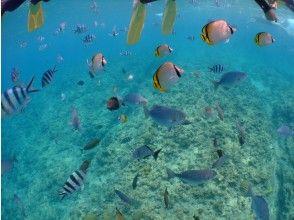 プランの魅力 熱帯魚の群れ の画像