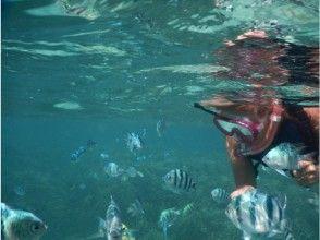 プランの魅力 魚や珊瑚が間近で観られます の画像