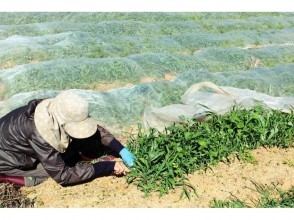 プランの魅力 Cultivation by local farmers の画像