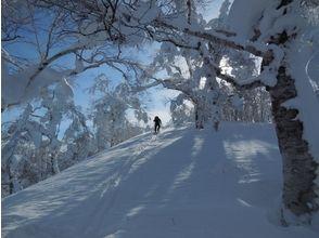 【北海道・大雪山】パウダースノー三昧!バックカントリースキーコースの魅力の説明画像