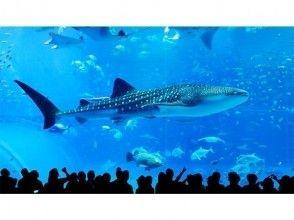 プランの魅力 海游阁公园/冲绳美丽海水族馆:约3小时 の画像