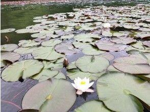 プランの魅力 Water lily の画像