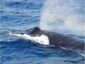 プランの魅力 間近でクジラの潮吹きも見れるかも!? の画像
