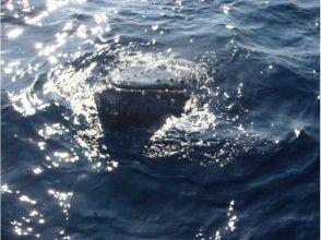 プランの魅力 慣れているクジラの場合、船に近づいてくることも!? の画像