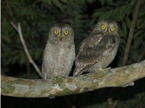 プランの魅力 天然記念物や可愛い野生動物に出会えます! の画像