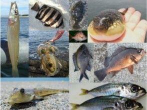 プランの魅力 個性イッパイ&カワイイお魚さん達 の画像