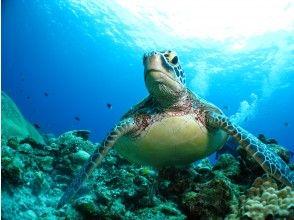 プランの魅力 国立公園ケラマ諸島カメポイント の画像