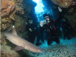 プランの魅力 国立公園ケラマ諸島サメポイント の画像