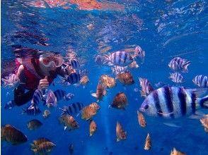 プランの魅力 熱帯魚に餌付け体験できます。 の画像