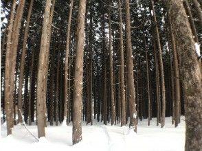 プランの魅力 Beautiful coniferous forest! の画像