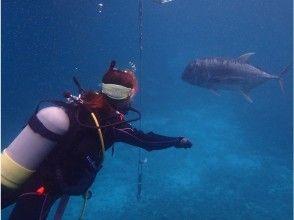 プランの魅力 투명한 오키나와의 바다를 수영 の画像