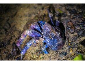 プランの魅力 您也许可以遇到亚热带独有的生物! の画像