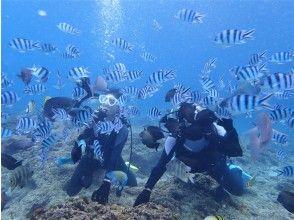 プランの魅力 Experience unique to diving! の画像