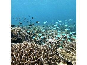 プランの魅力 綺麗な珊瑚のポイント の画像